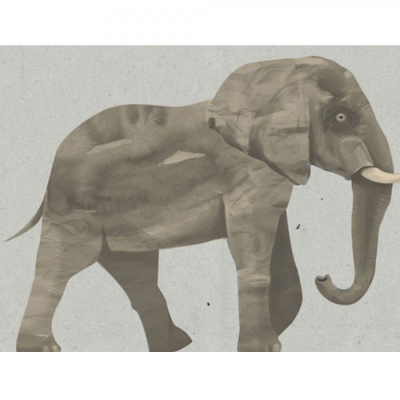 Wild & Soft muursticker olifant